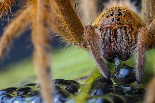 Estos son algunos de los aspirantes a mejor fotógrafo de vida salvaje de 2020 según el concurso Wildlife Photographer of the Year