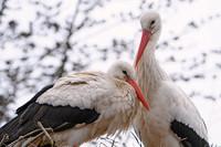 Programa de turismo ornitológico en Castilla y León