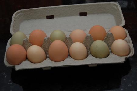 Cartón de huevo