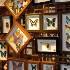 Foto 45 de 95 de la galería visitando-malasia-dias-uno-y-dos en Diario del Viajero