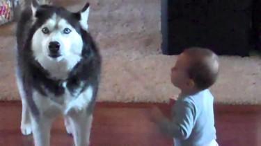 La curiosa reacción de un perro al diálogo de un bebé: ¿Le habla? ¿Pide ayuda?