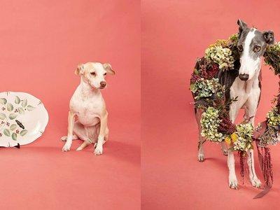 Las Muy Perras, arte y diseño para ayudar a los perros abandonados