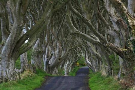 dark-hedges-62-590x393.jpg