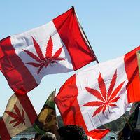Canadá legalizó la marihuana. Y ahora sus productores culpan a la ley de frenar su crecimiento