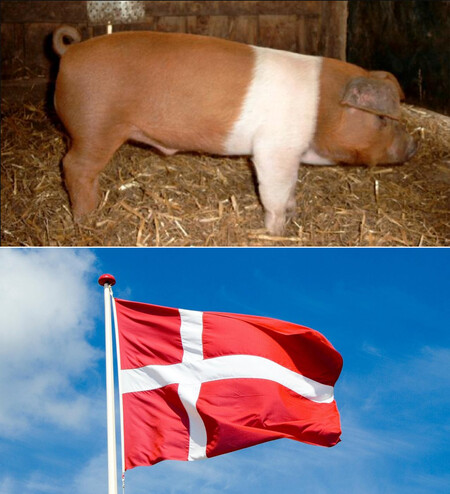 Cerdo Bandera
