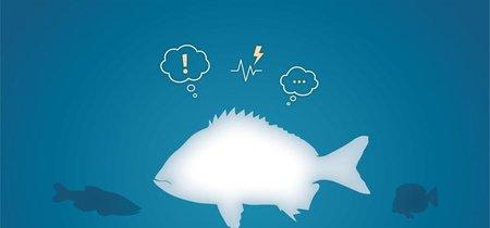 Se demuestra por primera vez que los peces tienen estados emocionales