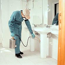 Evitar las plagas en casa, especialmente en la cocina