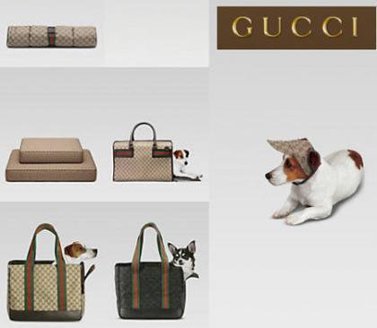 Colección de Gucci para perros... y amos
