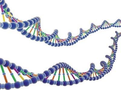 [Vídeo] Los genes humanos no deben ser patentados