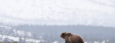 Los osos han vuelto a nuestras vidas. Y en vez de odiarlos, tenemos que aprender a convivir con ellos