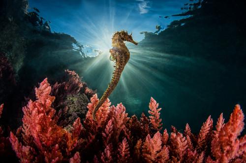 Estas son algunas de las mejores fotografías de naturaleza de 2018 según el concurso internacional MontPhoto