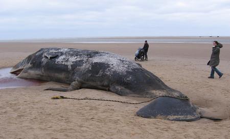 Un cachalote ha muerto por comer 29 kilos de basura. Otro ejemplo de nuestro enorme problema con el plástico