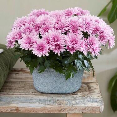 ¿Sabías que las flores pueden ayudarte para aliviar el estrés,  la ansiedad o la tristeza?