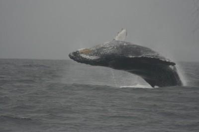 Avistamiento de ballenas en Ecuador