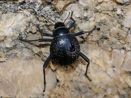 Copiando a la naturaleza, cómo conseguir agua en el desierto de la misma manera que un escarabajo