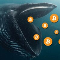 Las ballenas del bitcoin: 10.000 personas controlan un tercio de todos los bitcoins que hay en el mundo