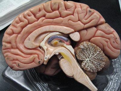 Ésta área de tu cerebro no madura hasta que cumples 36 años