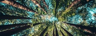 Reforesta el planeta navegando por Internet: así es Ecosia, la alternativa verde a Google que convierte tus búsquedas en árboles