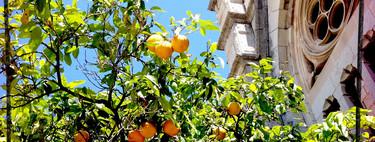 El Valle de los naranjos en Sóller, uno de los paisajes más bellos de Mallorca