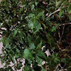 Foto 18 de 29 de la galería blackberry-key2-fotografias en Xataka