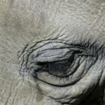 Del llanto de las focas a la negación de las ballenas: así velan la muerte los animales