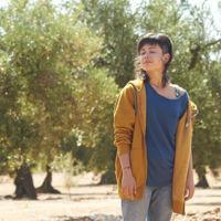 'El olivo', tráiler de la nueva película de Icíar Bollaín