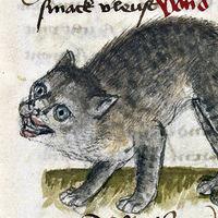 """""""Fuerzas oscuras"""" y misterios demoníacos: por qué dibujaban tan feos a los gatos en la Edad Media"""