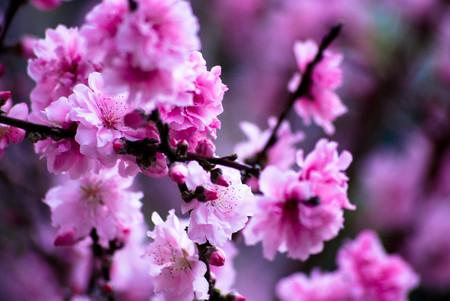 ¿Cuándo empieza la primavera este año?