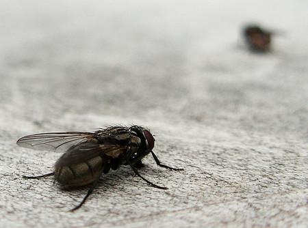El gen de la mosca que nos hace dormir por la tarde (y II)