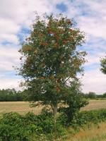 Usar conservantes es sano, más sostenible y 100% natural. Ejemplo práctico.