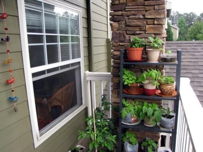 Plantas en una pequeña terraza