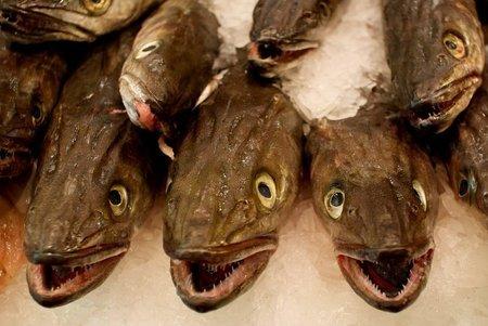 Errores o fraude en el etiquetado de la merluza