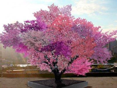 Un árbol que da cuarenta frutas distintas