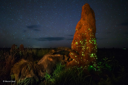 The Night Raider Marcio Cabral Wildlife Photographer Of The