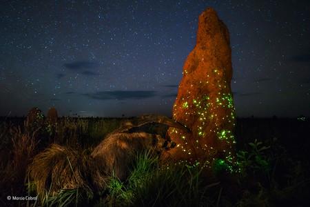The Night Raider Marcio Cabral Wildlife Photographer Of The
