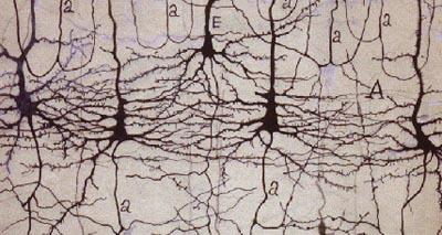 Niveles de análisis en neurociencia
