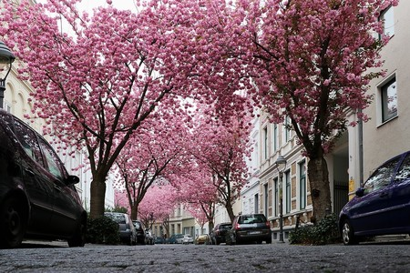 Cherry Blossom 2198737 960 720
