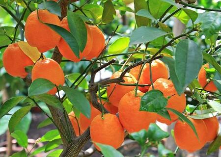 Oranges 1545036 480