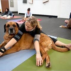 Foto 2 de 5 de la galería yoga-con-tu-mascota en Trendencias