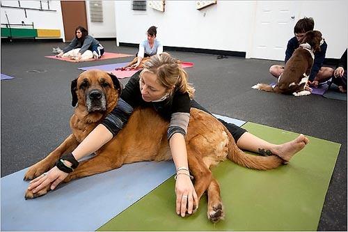 Foto de Yoga con tu mascota (2/5)