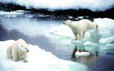 Nuevo Parque Nacional para proteger al oso polar