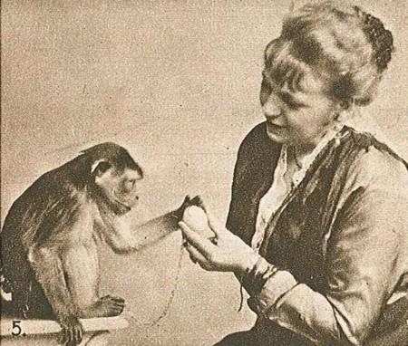 ¿Los animales también tienen sentimientos? Las neuronas espejo de los animales