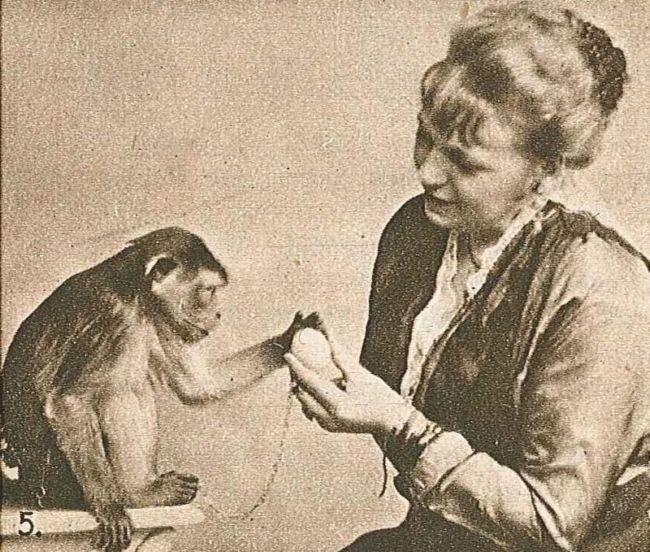 Los animales tambi n tienen sentimientos las neuronas for Espejo unidireccional psicologia