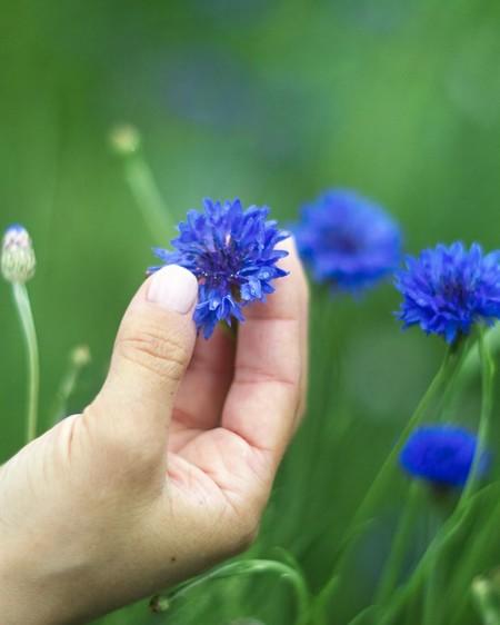 Klorane flor de aciano