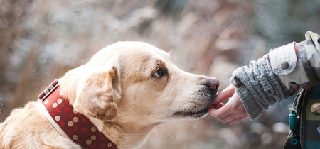 Cada vez más dueños de mascotas se pasan a la comida sin grano. En muchos casos es peor que el pienso normal