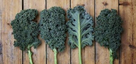 Kale (Berza) la hoja de las mil maravillas