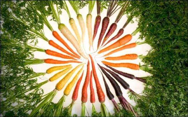 Carrot Color Arrangement