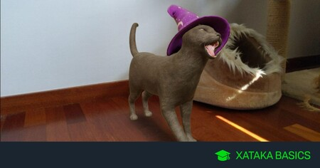 Cómo usa el gato mágico y el resto de animales de Halloween de realidad aumentada de Google
