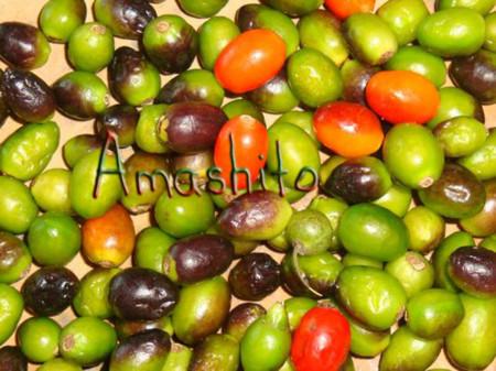 Amashito