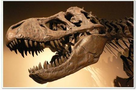 La mayor colección de fósiles de dinosaurios se exhibe en Madrid